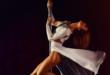Pole Dance 110x75 - Pole Dance - der neue Trendsport